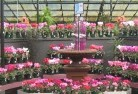 Green Fields Garden centre 2